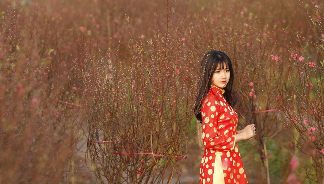In photos: Hanoi peach blossoms ready for Tet