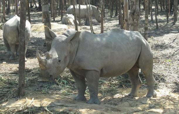 Reports of mass animal deaths at Vietnam safari zoo are false: authorities
