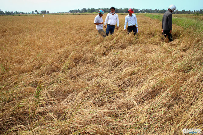Drought, salinization forecast to worsen in Vietnam