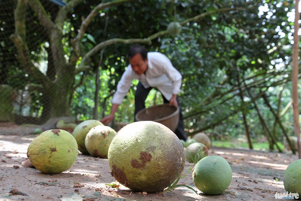 Vietnam's 'fruit kingdoms' ravaged by salinization