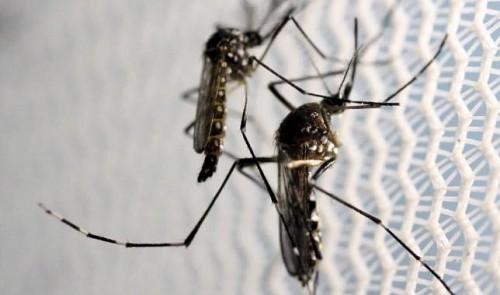 Vietnam reports first Zika infections, raises alarm