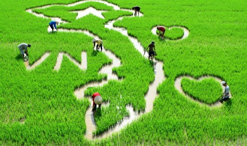 A Vietnamese map in the rice field