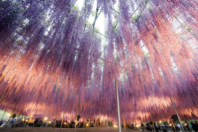 Fuji flowers shining