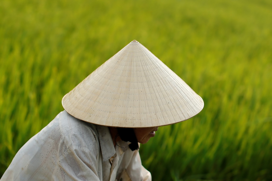 A woman wearing a traditional hat, known as non la sits in a rice field outside Hoi An, Vietnam April 5, 2016.