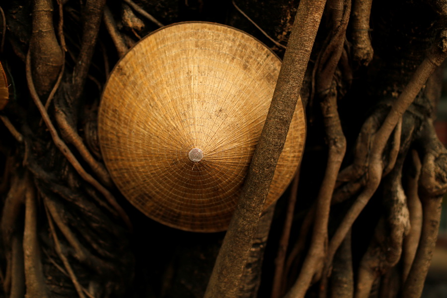 A Vietnamese traditional hat, known as a non la, is seen in a tree in Hoi An, Vietnam April 5, 2016.