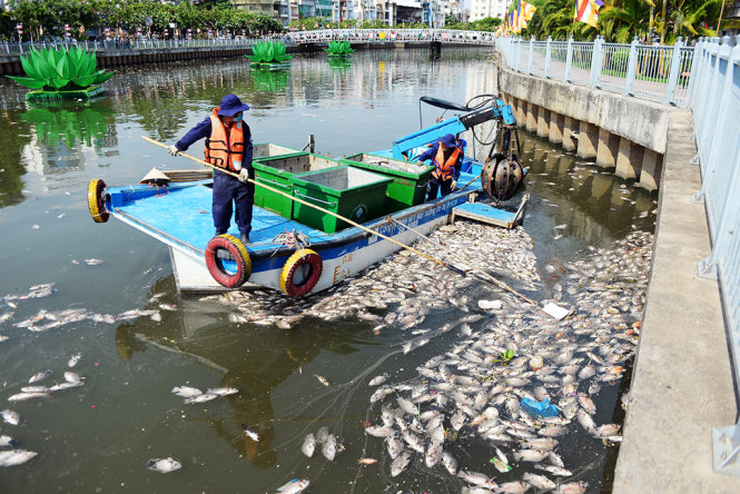 70 tons of fish die in Ho Chi Minh City canal; cause identified