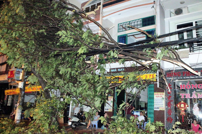 Torrential rains axe, uproot trees in Ho Chi Minh City
