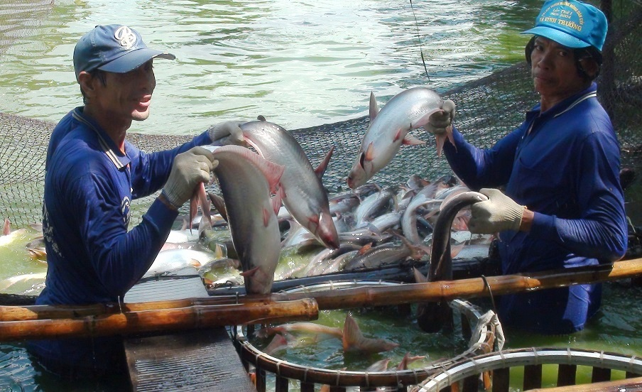 Vietnam catfish farmers indebted as demand from Chinese market drops