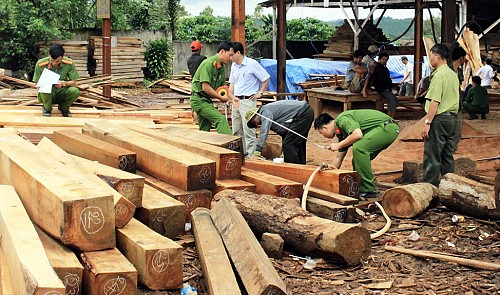 Ring leader in illegal logging trade wanted by Vietnamese police