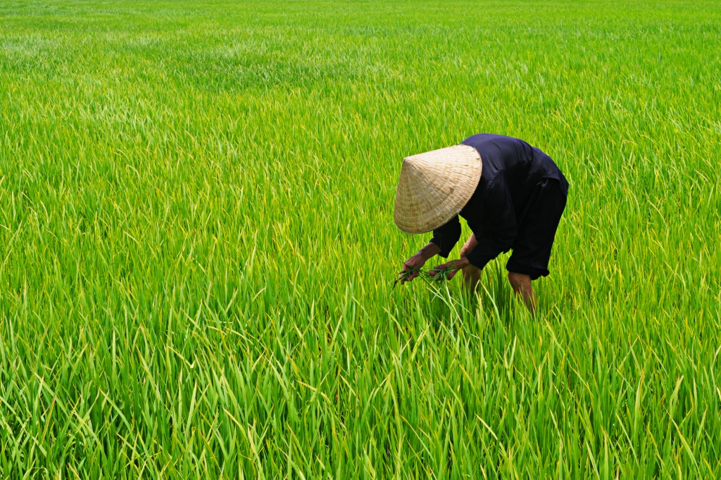 She also clean grasses and grows beans for the locals with a daily income of VND100,000 ($4.47).