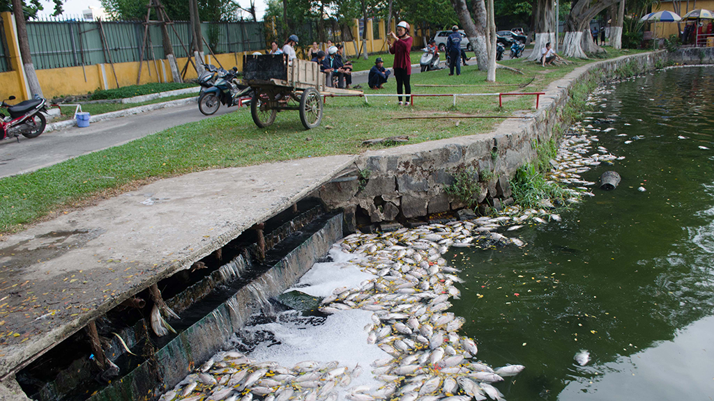 Tons of fish found dead in Da Nang park