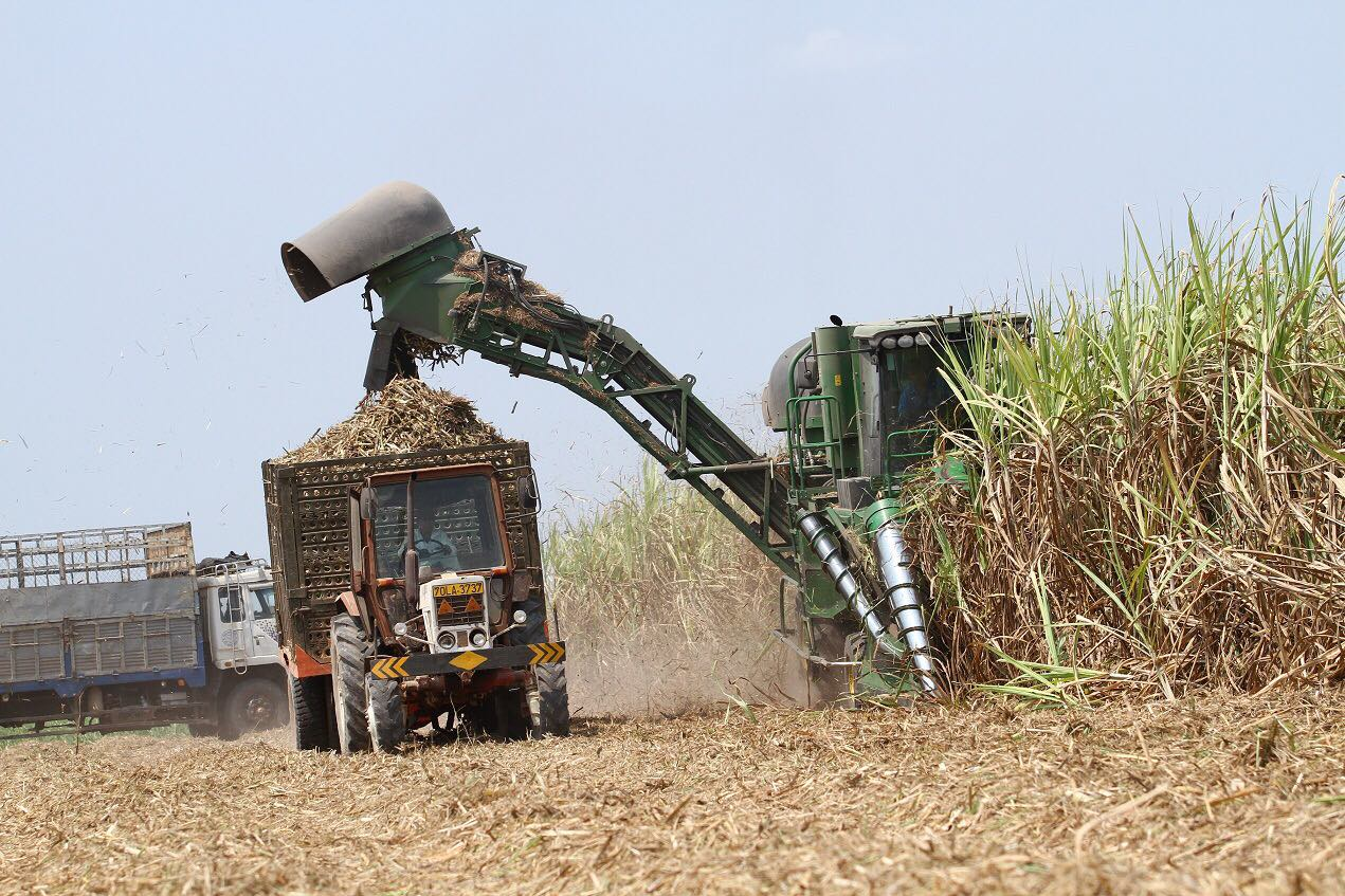 Vietnam sugarcane industry faces challenge from climate change, foreign rivals