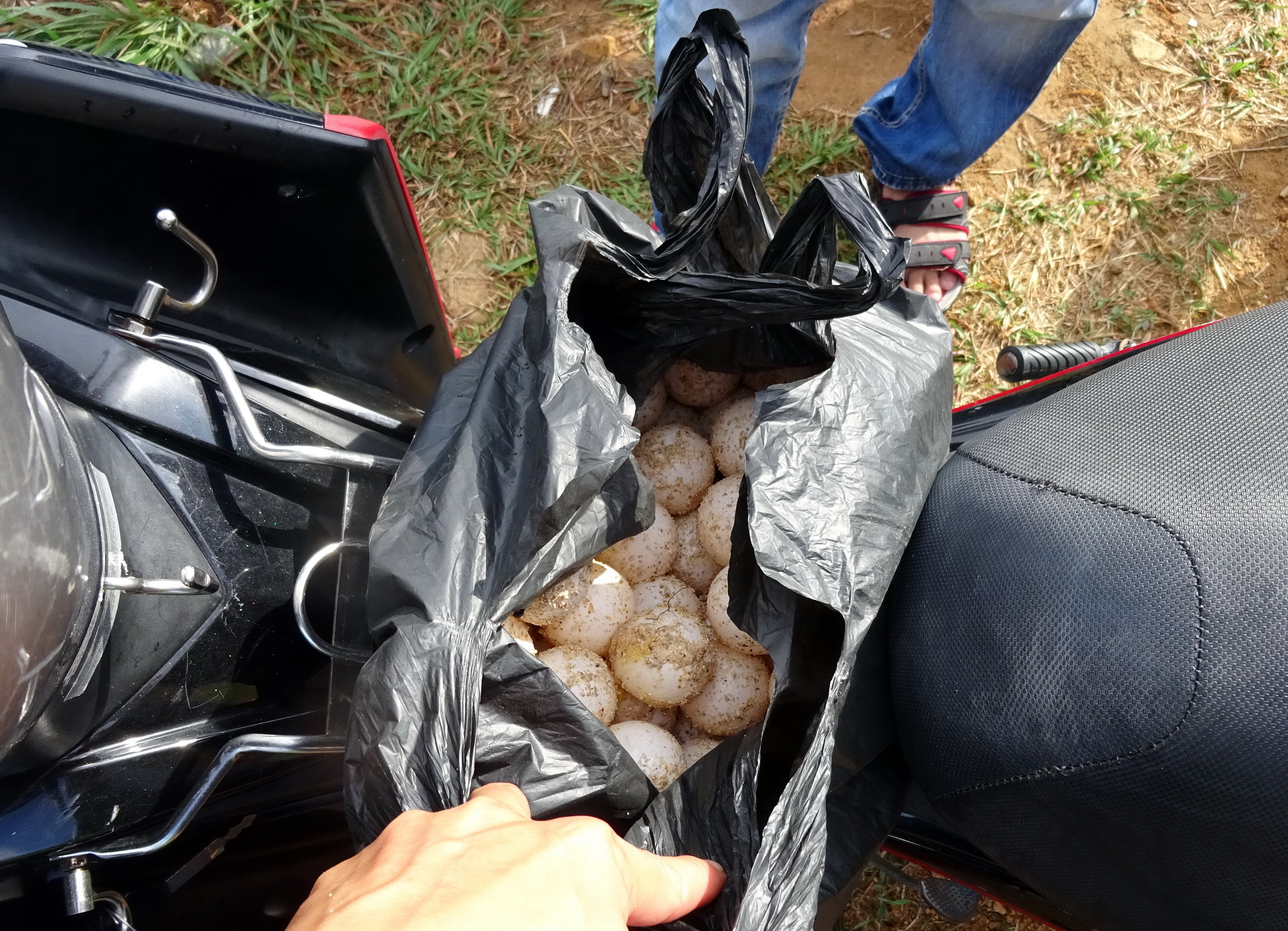 Vietnam prosecutor says turtle egg is not from a turtle