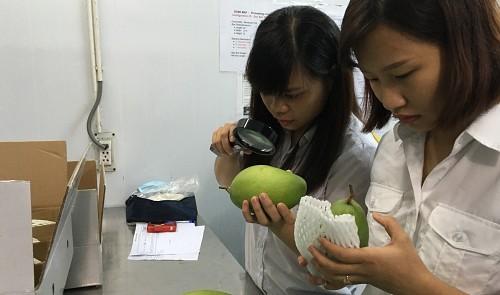 Fruit, vegetable exports surpass rice shipments: Vietnam Customs