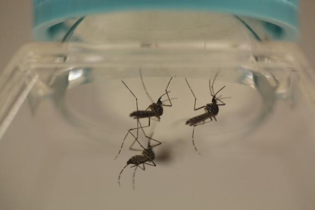 Zika disease becomes endemic in Vietnam: health official