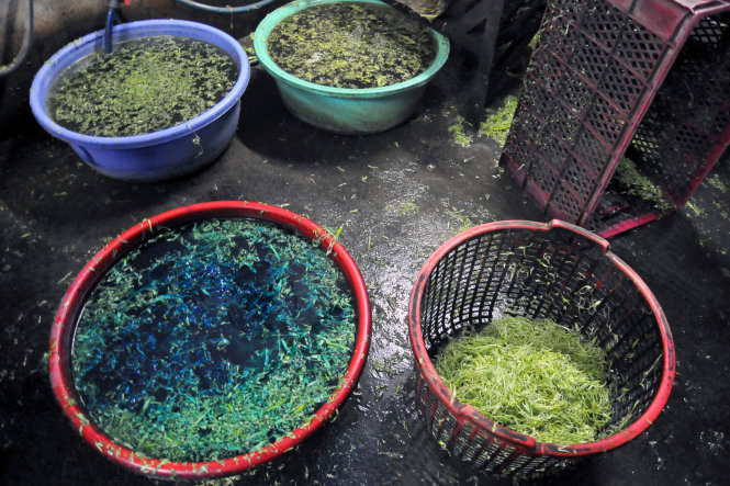 Supplier caught soaking water spinach in chemical in southern Vietnam