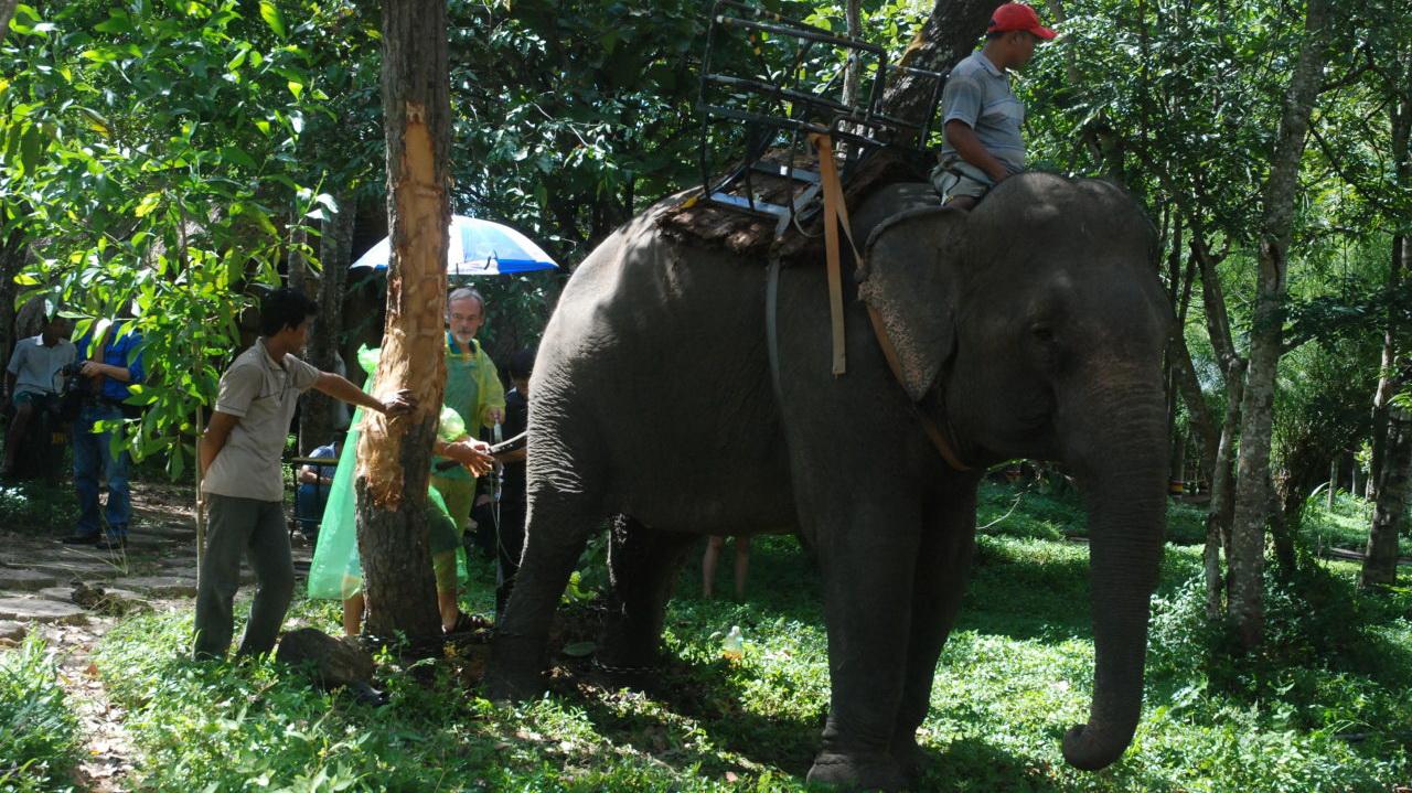 Vietnam uses ultrasound to determine virility of domestic elephants
