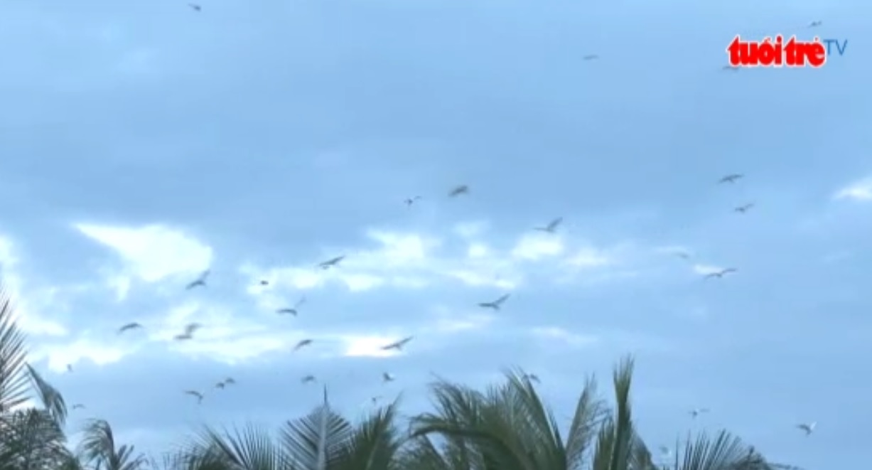 Thousands of storks find their home in southern Vietnam