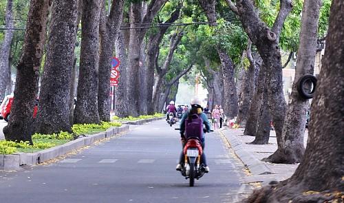 Ho Chi Minh City considers 'retiring' trees