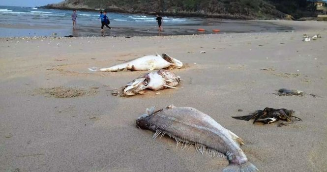 Fish death disaster excluded from Vietnam's 2016 remarkable environ events