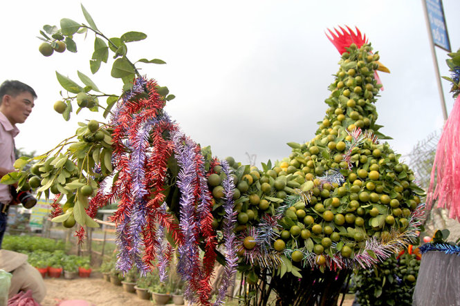 Vietnamese farmers prepare to sell rooster-shaped trees for Tet