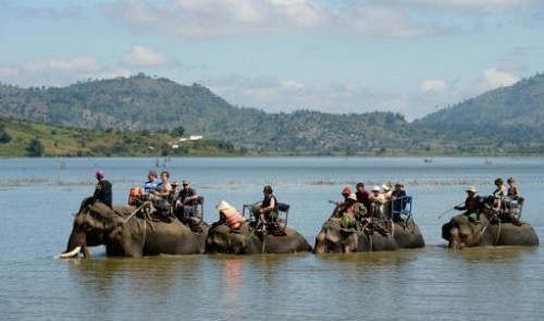 Survival of the unfittest: Vietnam's disappearing elephants