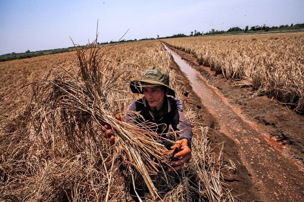 Drought, salinity take heavy toll on farmers in Vietnam's Mekong Delta