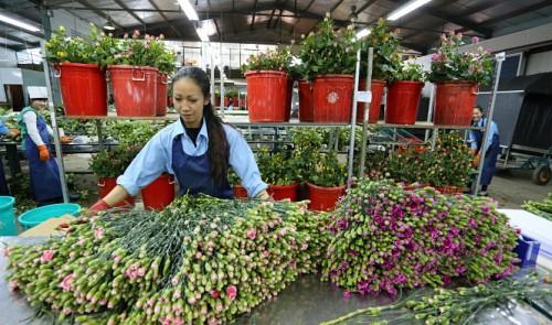 Da Lat, Ho Chi Minh City plan on flower exchange centers