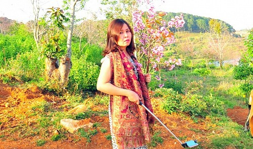 Justice dept official trashed for picking cherry blossom in Da Lat