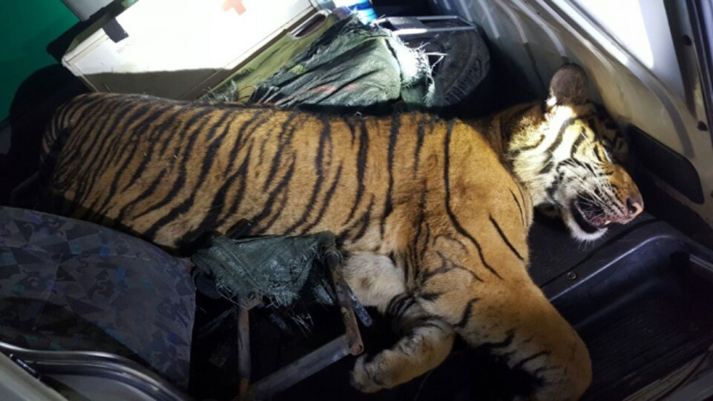 Ambulance found carrying tiger carcass after police chase in northern Vietnam