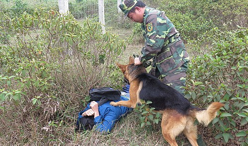 The canine warriors of Vietnam's border defense force
