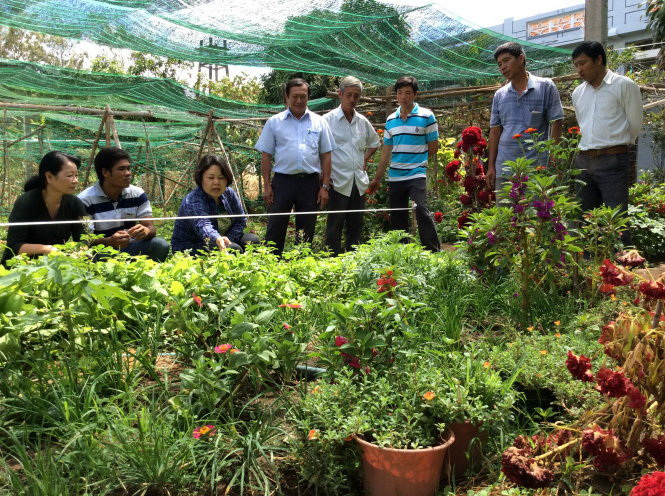 Japanese NGO assists Vietnamese farmers in producing safe greens