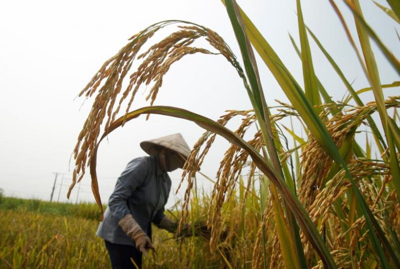 Asia Rice-Vietnam prices hit 13-month high; Thailand up on lower supply