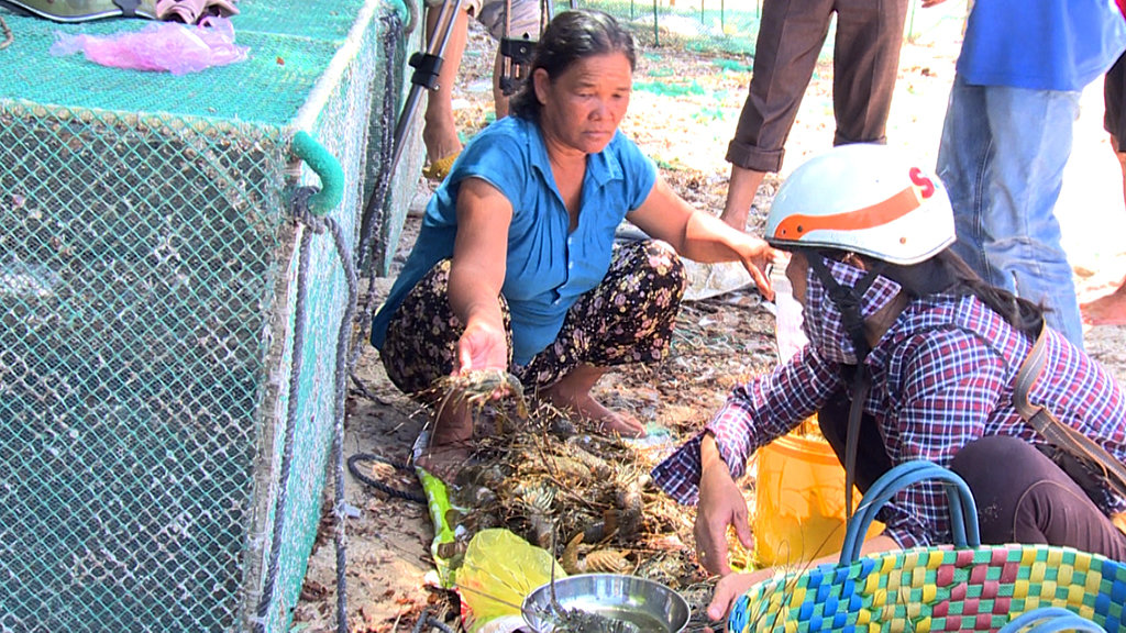 Vietnamese province to declare state of natural disaster as lobsters die in droves