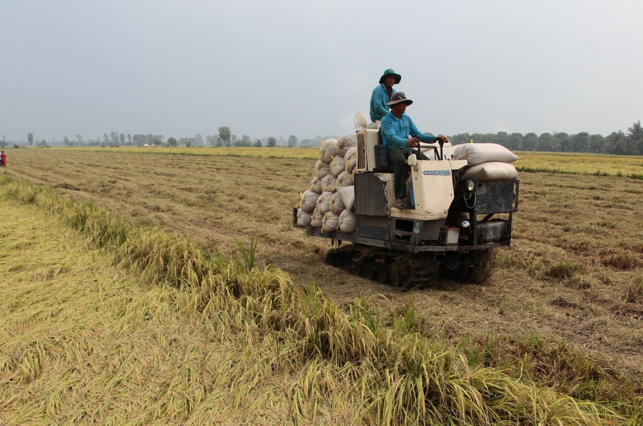 Asia importer demand pushes rice prices; Vietnam hits near 2.5-yr high