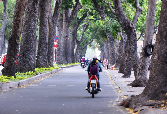 Ho Chi Minh City authorities powerless to protect green trees