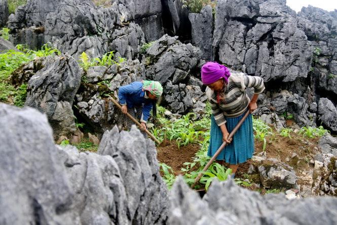 Alpine ethnic people in Vietnam – P2: Growing crops on rocks