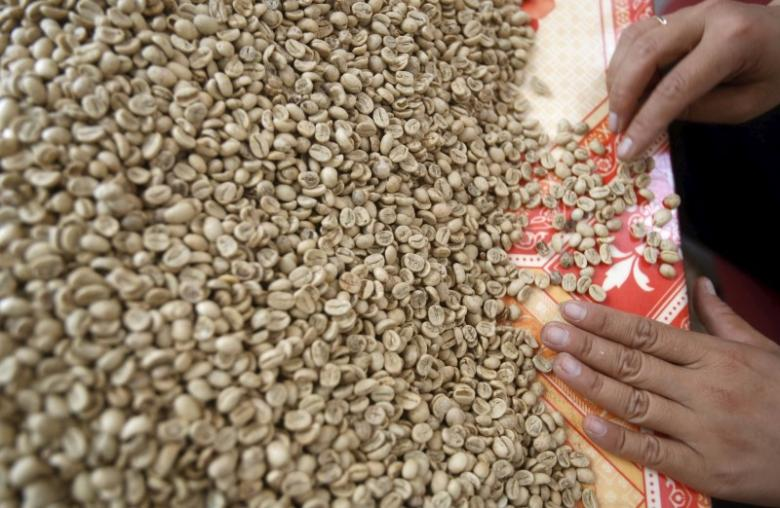 Vietnam's exporters hunt for robusta coffee as supplies dwindle
