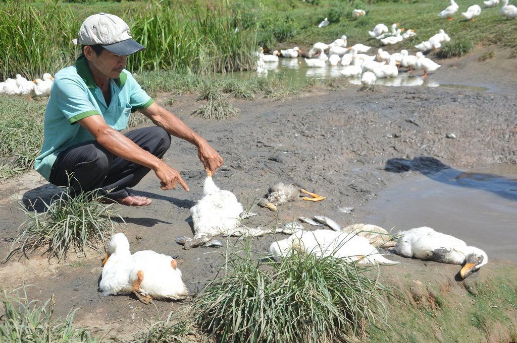 Ducks, fish die en masse in central Vietnamese village