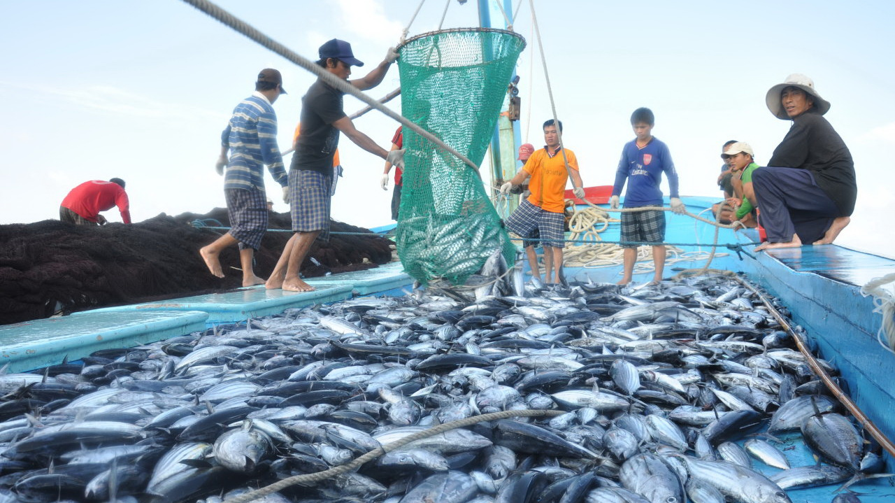 Contaminant, toxin levels along central Vietnamese coast not abnormal: authorities