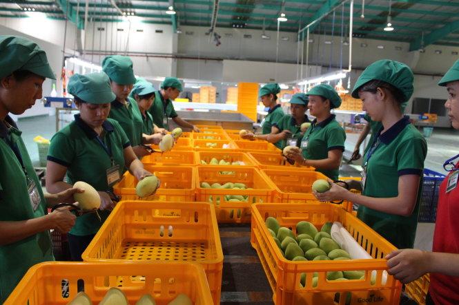 Vietnamese economy to grow 6.3% in 2017: World Bank
