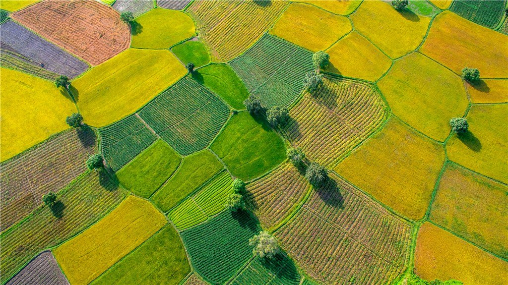 Spring fields in An Giang Province.