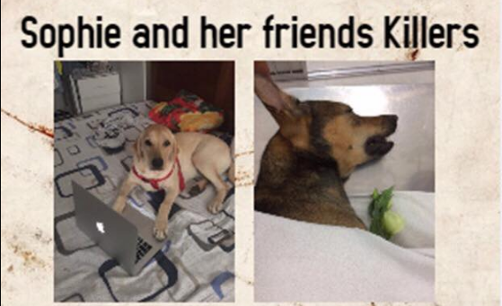 Saigon pet owners in expat neighborhood lose sleep over mass poisonings