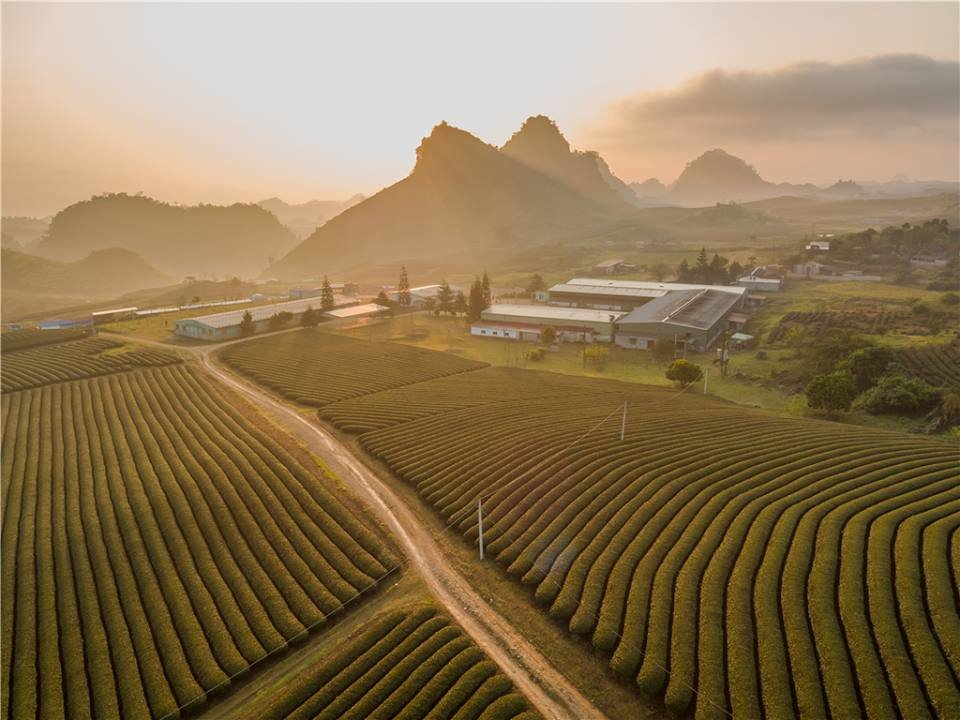 'Early sun on the paddy fields' by Nguyen Hoang Nam – consolidation prize
