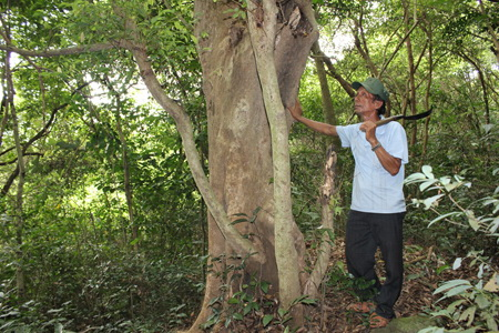 65-year old war vet continues to protect forests in central Vietnam
