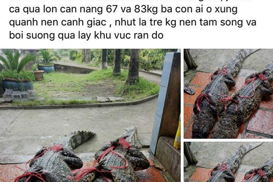 Vietnamese man fined for posting fake news to Facebook