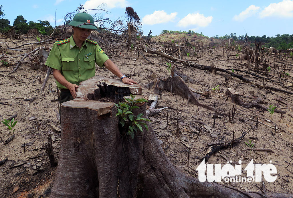 ​Large forest destroyed in organized manner in south-central Vietnam