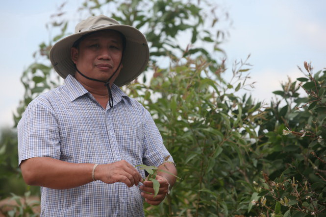 Vietnamese researchers work hard to conserve cajuput genes