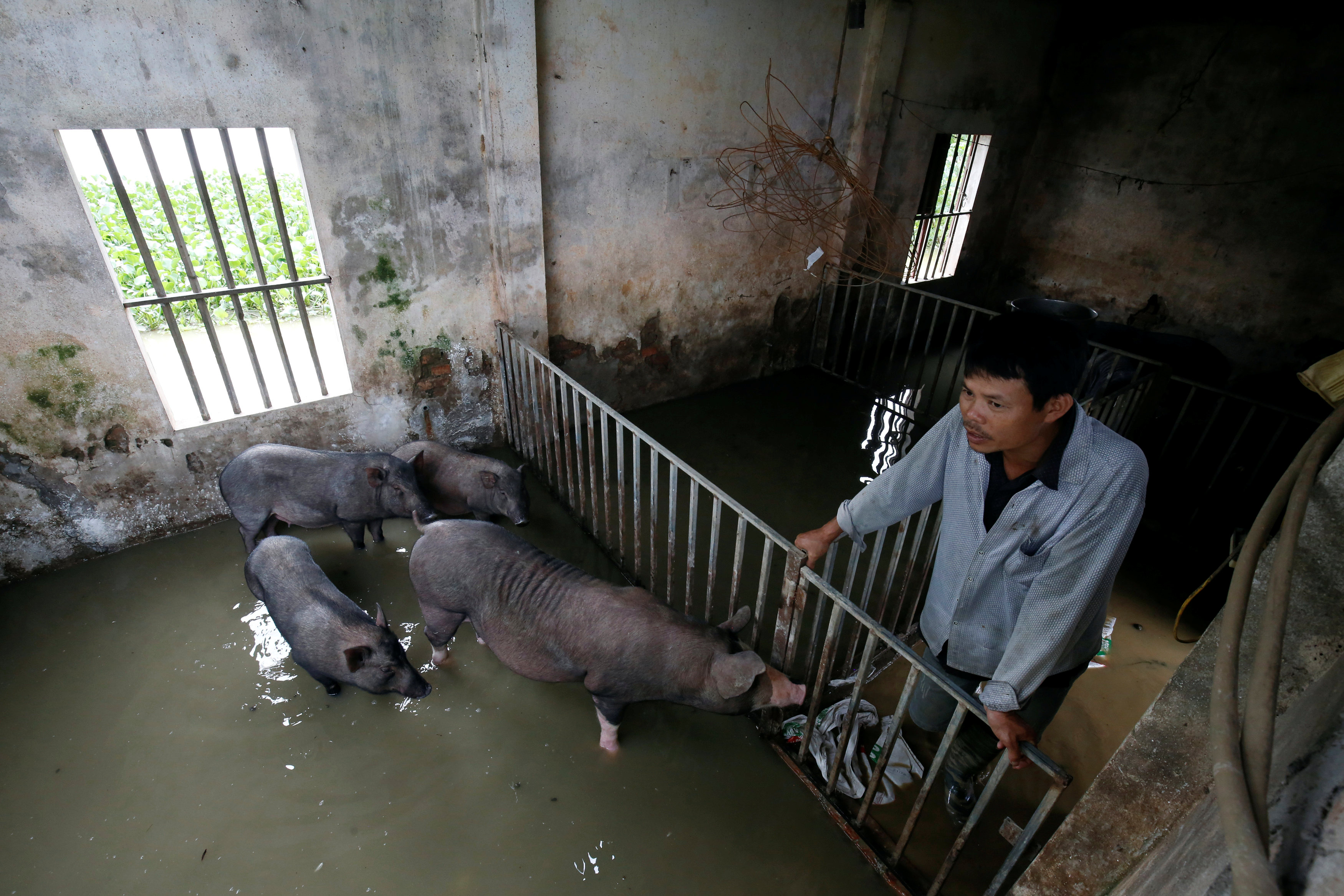 A farmer stands in his flooded pig farm after a tropical depression in Hanoi, Vietnam October 13, 2017. Photo: Reuters