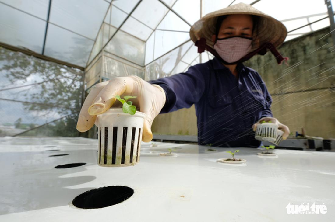 Da Lat farmer grows vegetables in air